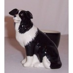 COQUETIER BORDER COLLIE