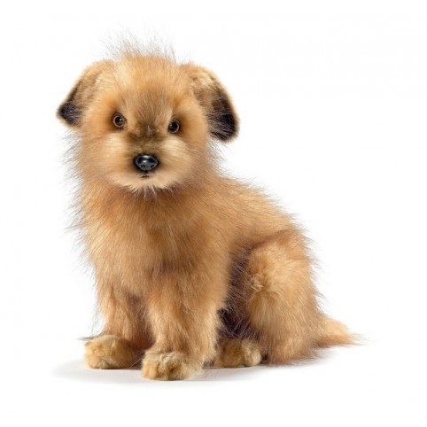 PELUCHE NORFOLK TERRIER ANIMA
