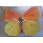 HORLOGE PAPILLON JAUNE