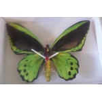 HORLOGE PAPILLON VERT