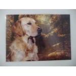 SET DE TABLE GOLDEN RETRIEVER