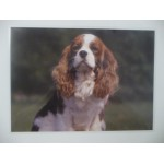 SET DE TABLE CAVALIER KING CHARLES