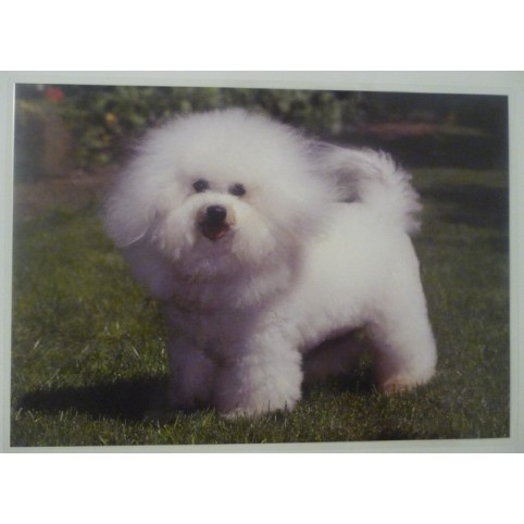 SET DE TABLE BICHON FRISE