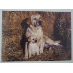 SET DE TABLE LABRADOR JAUNE
