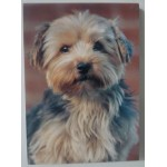 PETIT BLOC NOTES YORKSHIRE TERRIER