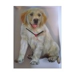 HORLOGE GOLDEN RETRIEVER